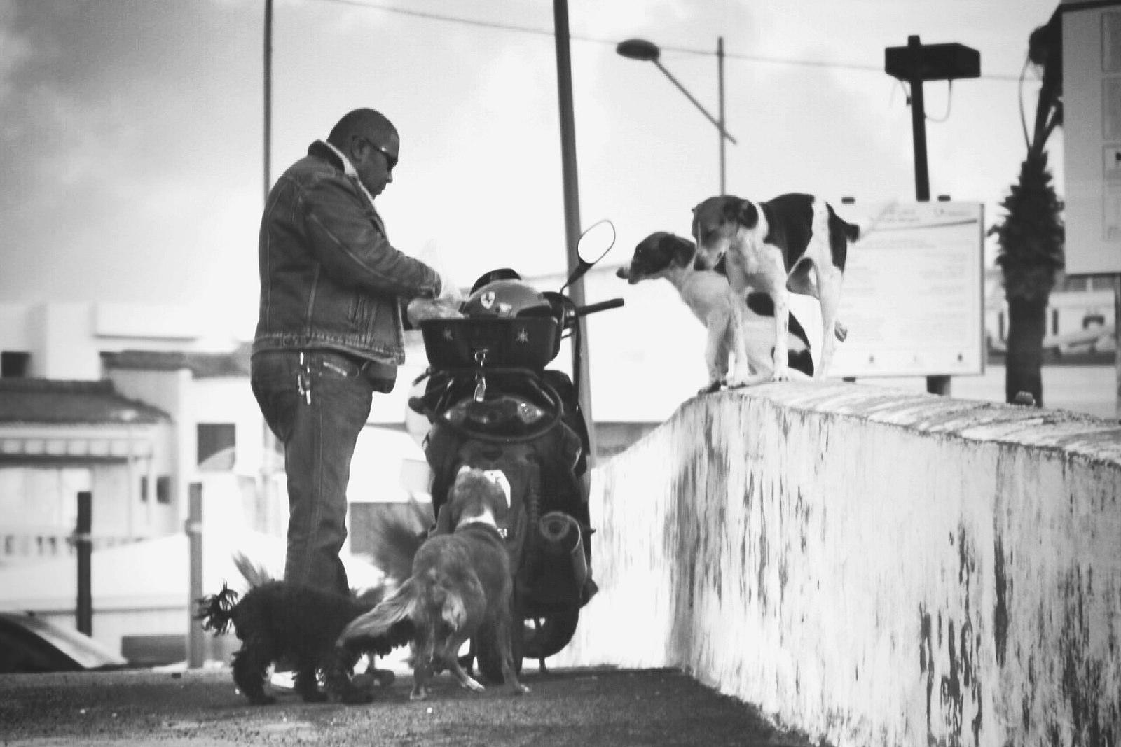 Photo of a man demonstrating generosity by feeding street dogs
